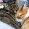 猫(ペット)も一緒に避難したい【災害時】我が家の防災の取り組みと備え