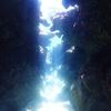 ♪光の洞窟で50ダイブおめでとう♪〜沖縄ダイビング那覇から日帰り慶良間〜