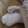 今日の黒猫モモ&白黒猫ナナの動画ー897