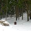 一ヶ月振りの雪かき