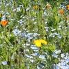 無料で花と遊びが楽しめる「くりはま花の国」