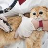 ペットの健康はとっても大事、信頼できる動物病院を探しましょう!