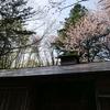 湯川さんが住んでた野幌屯田兵屋を訪問、湯川公園の桜を見るなど。