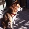 【備忘録】飼い犬が死んだ。彼の死を悼んで。