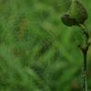 水滴の付いたキラキラしたクモの巣を撮影してしまう心情を吐露
