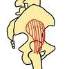 小殿筋~解剖、特徴、トレーニング~