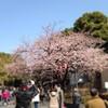 春の上野散歩