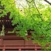 【松戸】あじさいが咲く四季の寺・長谷山 本土寺①穴場と思ったら全然ちがった