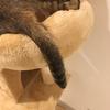 これであなたも猫の気持ちがわかる!しっぽの役割と秘密に迫ってみた
