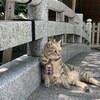 <空海創建>しだれ桜で有名な玉蔵院の名物お守り猫マロちゃん(埼玉県さいたま市浦和区)