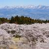 相馬原駐屯地創立記念行事で桜をどうにかしてヘリと絡めようとした男の記録