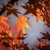 髪の傷みが気になる方へ、秋のおすすめヘアケアグッズ3選♪♪