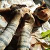 「猫の靴下、想像以上に猫」……リアルな肉球はまさに猫好きホイホイ