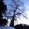 岩井畝の大桜に雪が降った日、駐車場は新雪だった