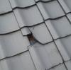 屋根はほっといても直らない。