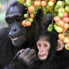 私たちのこころは動物から進化してきた「比較認知科学」(放送大学)後編