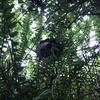 浜松市で草むらにできたスズメバチの巣を駆除してきました!