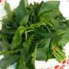 冷凍食品の野菜がきれいな緑色を維持できるのは?