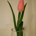 tulipsaita's blog