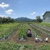 毛豆の定植終了しました!夏野菜の収穫シーズン到来です!