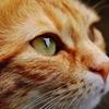愛猫を守れ!「COVID-19」だけじゃない!コロナウイルス「FIP」の脅威