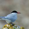 【疑問】渡り鳥は休まない?渡り鳥は一度にどれくらいの距離を飛んでいるのか