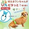 犬の 躾 でお悩みの方は ブルピタ の効果をお試しください!