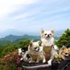 富士見テラスから山頂展望台へ上がって見た眺め【2018GWの旅行◆その18】