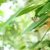 世界ふしぎ発見で『女ムツゴロウ』さん特集でした