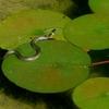 蛇と蛙の政治学