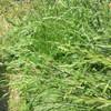 雑草を見て