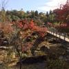 ぎふ清流里山公園の秋 その6