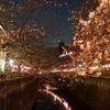 夜桜見物は人が少ない池尻大橋がオススメ 帰りはしっぽり『ししくら』へ