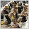 「塩豚と巨峰のサラダ、ポテトクリーム」ハロウィンバージョン@優美ロンドン・青山販売会 フィンガーフード