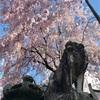 パイナップルシロップの報告と春らしい写真