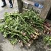 春の山の恵みを楽しむ、採って料理して食べる山菜イベント