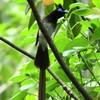 今日はサンコウチョウ♂♀とヤマガラの幼鳥❗️