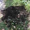 枯れ葉、雑草の処理 試み