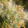 花粉症になってしまったので、漢方を試しまくることにしたで。〜花粉症に効く漢方とのみ方を、研究♪〜