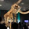 【博物館】大哺乳類展2に行ってきた。上野のパンダもあるよ🐼