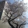 4月!桜!新学期!新校舎!