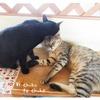 飼い猫の印