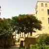 鳳凰木の咲く季節