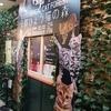 【写真有り】京都河原町にある猫カフェ『ひょう猫の森』が最高でした!