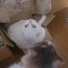 【ネコ】順番待ち