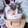 【ネコ】久しぶりの箱入り
