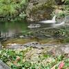 湯島天神での撮影 F3(Nikonのフィルムカメラ)の現像が終わりました