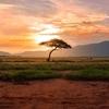 アフリカでのゲノム分析プロジェクトは人類誕生の歴史を明らかに