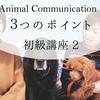 アニマルコミュニケーションを行うための3つのポイント YouTube配信