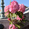 リドアイルの大きな花束